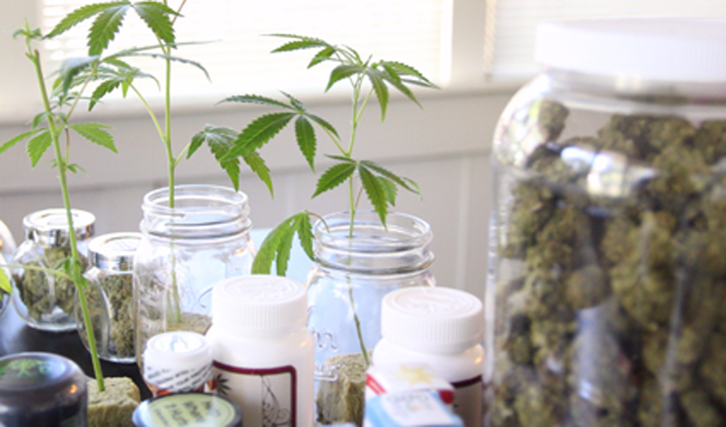 Cannabis plants and medical products